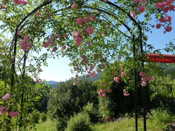 Rosen am Ferienhaus